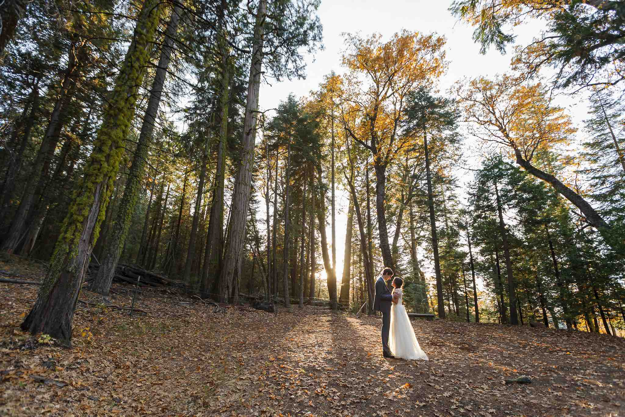 forest wedding, bergreen photography
